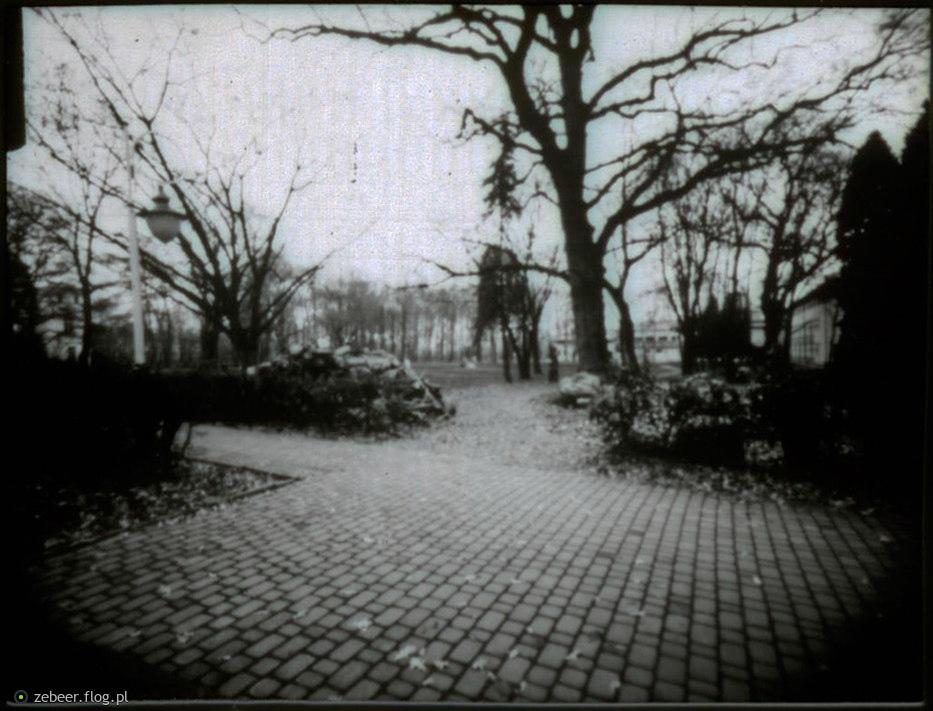 PInhole 6x8: Alejka w parku