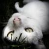 :: mam  wszystko  w ........<br />...... nosie:))